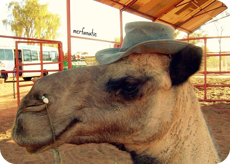 Camel in a Hat